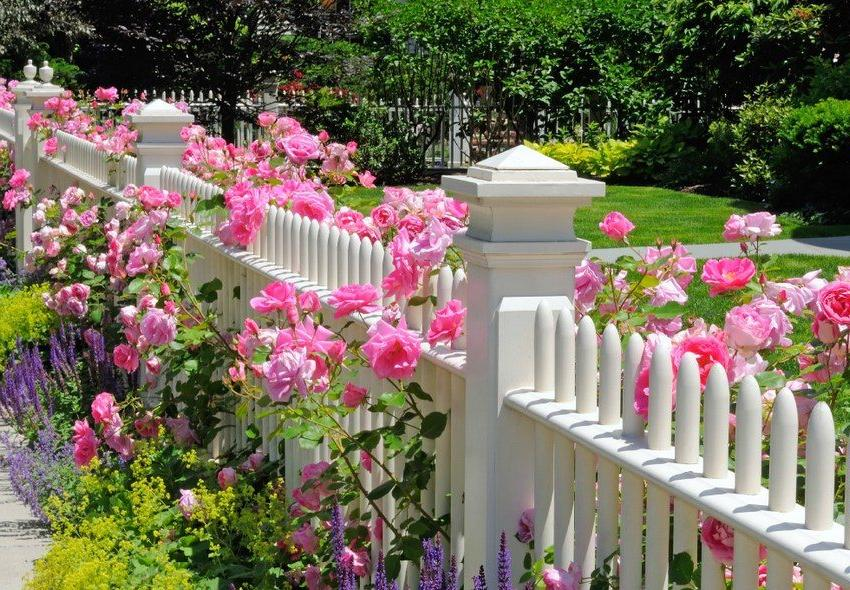 Mixborders of flowers decorating with fence
