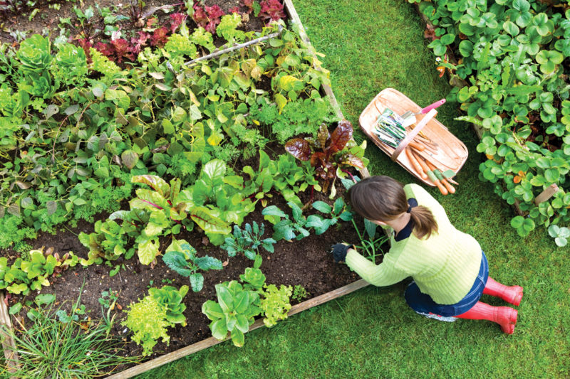 Perfect Spots To Start Vegetable Garden