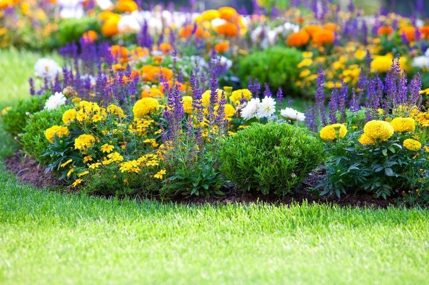 flowerbed combines different types of flowers