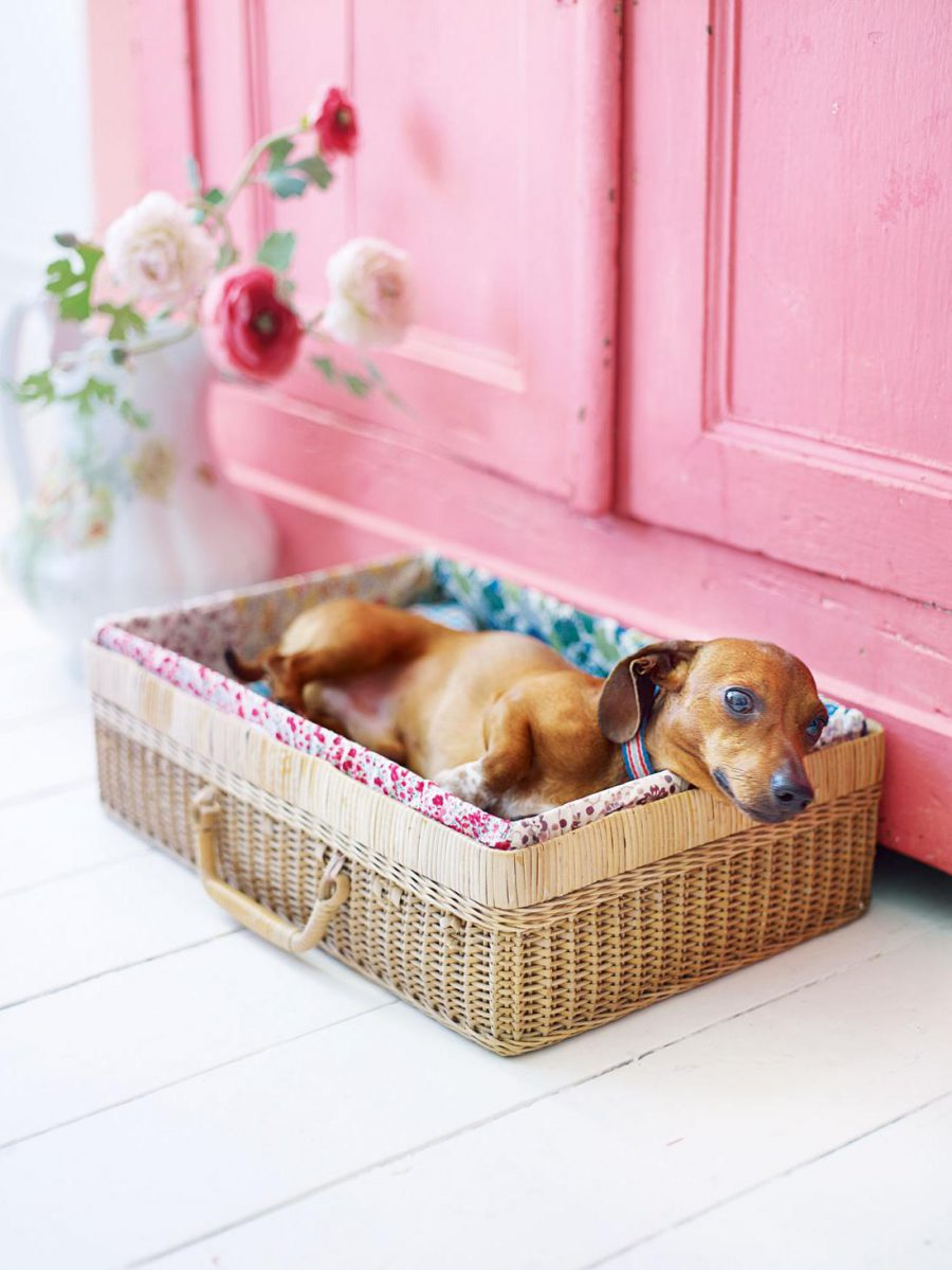 Basket Pet Bed Ideas