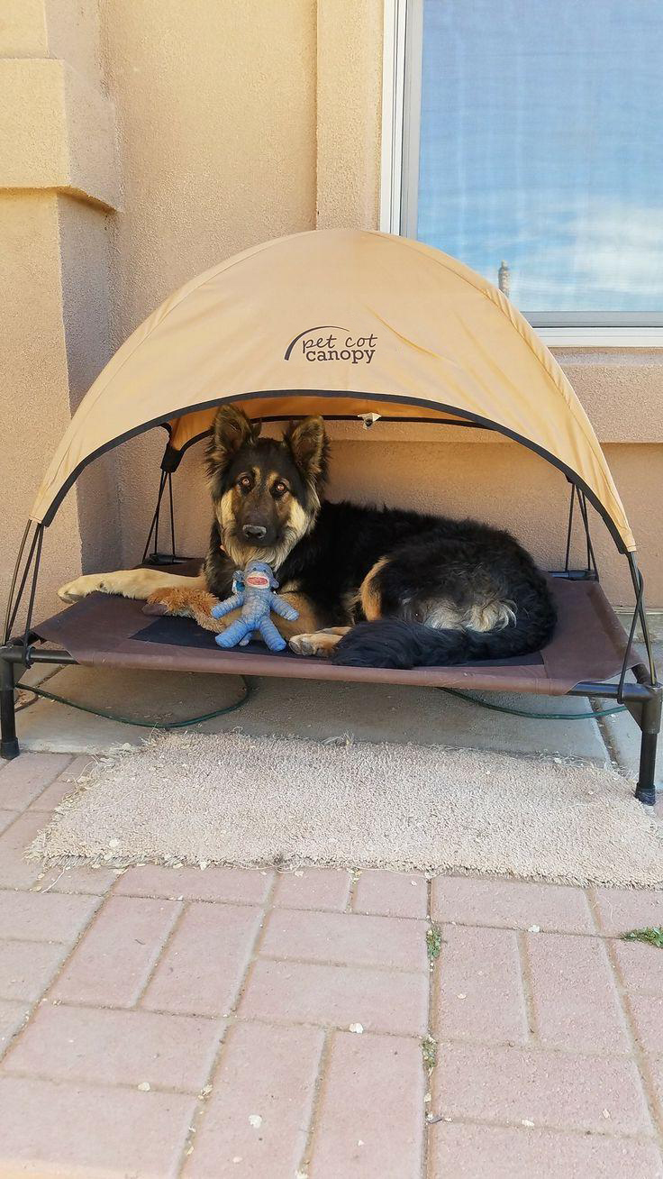Canopy Pet Bed ideas & 27 DIY Pet Bed Ideas For Your Inspiration - InteriorSherpa