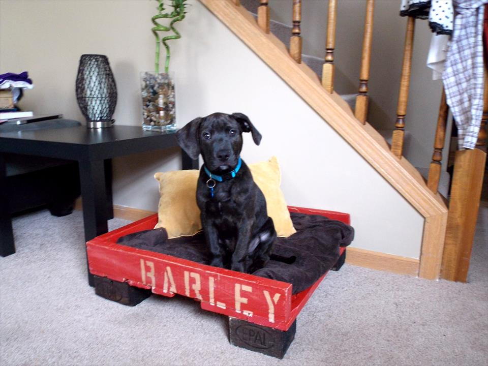 black and red pallet dog bed