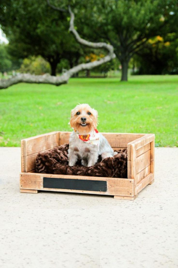 27 diy pet bed ideas for your inspiration interiorsherpa