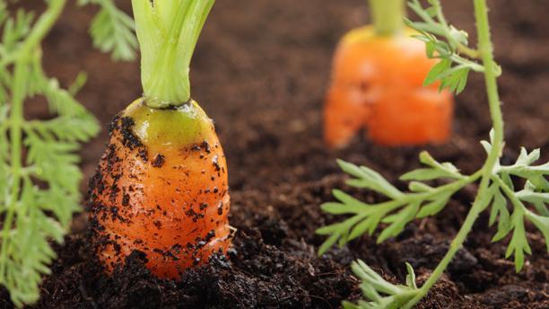 choose-correct-plants