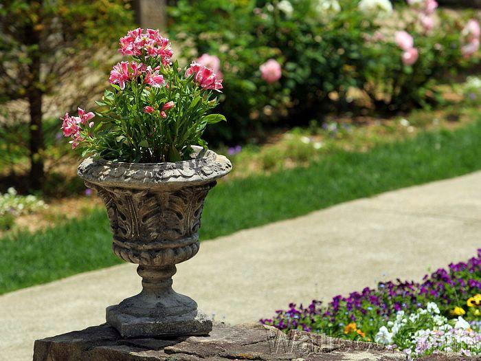 Container Pot Gardening Idea