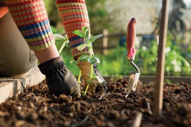 Fertilizer For Garden