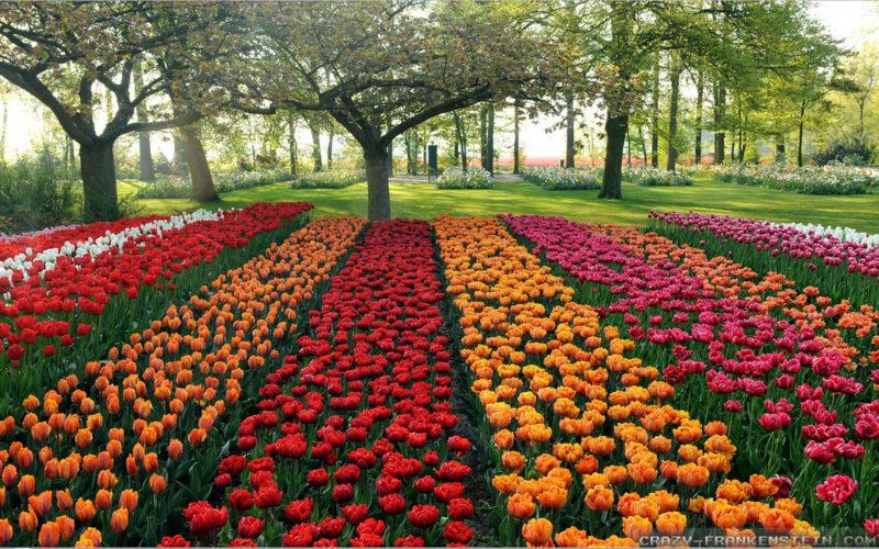 Grid Gardening Idea