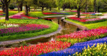 Labyrinthine Garden