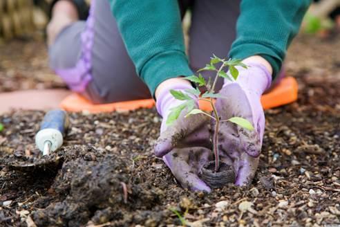 Planting Process