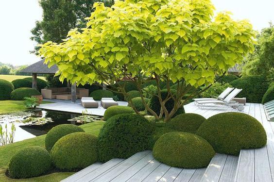 rock-topiary