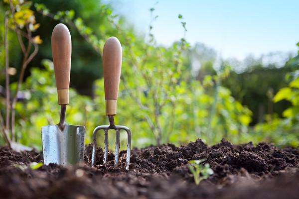 Soil Testing For Gardening