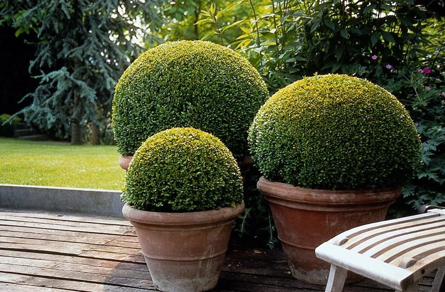 Terra Cotta Pieces For Small Garden