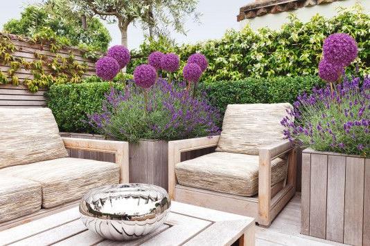 violet-patio-design