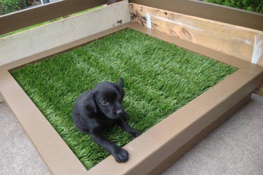 Balcony DIY Pet Bed Ideas