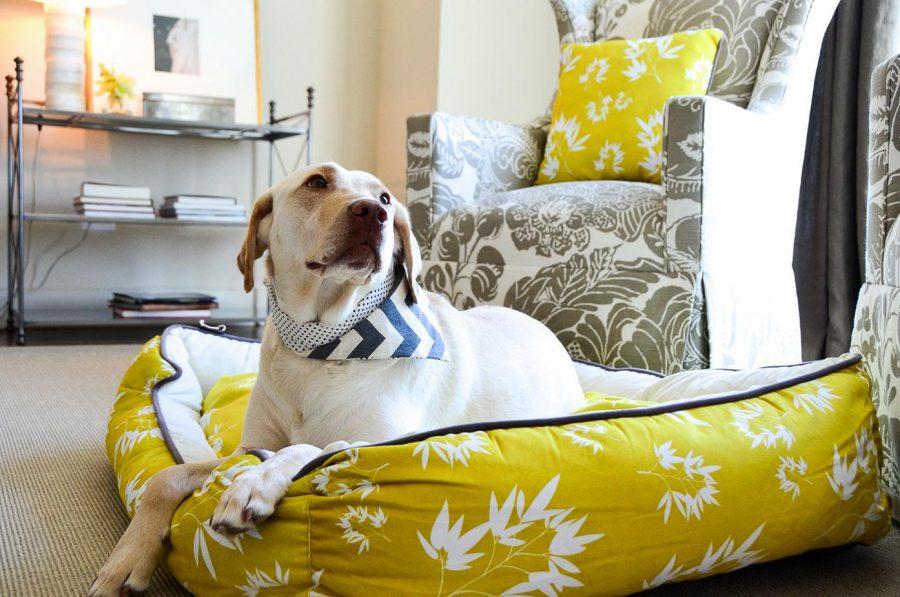 DIY large dog beds