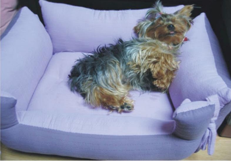 DIY luxury dog bed