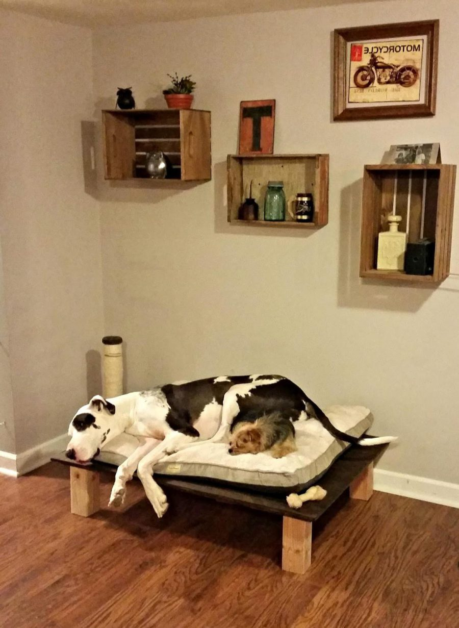 Inexpensive Pet Bed Ideas