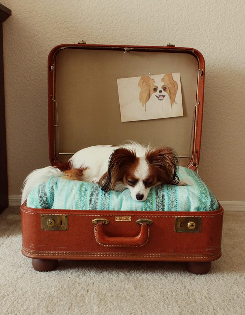 Recycled-Suitcase-Dog-Bed