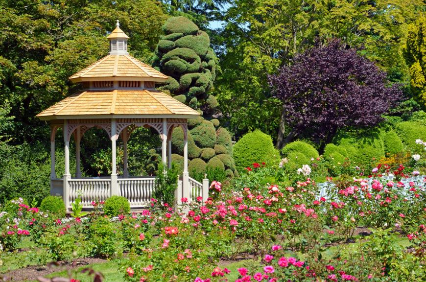 Gazebo in classical style on a background of a lawn of bush roses
