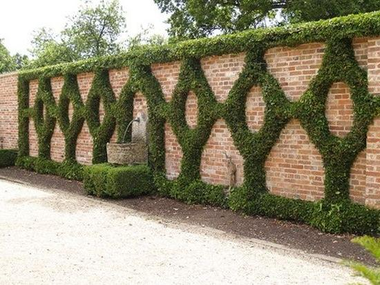 Brick fence can be decorated with climbing plants