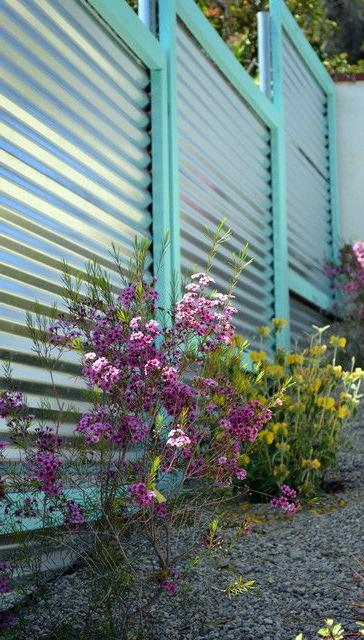 Magnificent fence made of profiled metal with turquoise edging