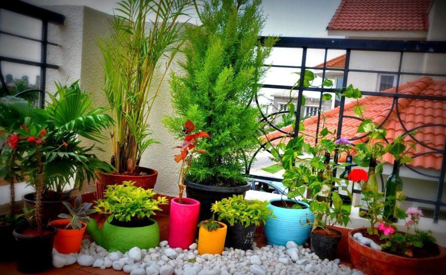 Balcony-Gardening With Pebbles Idea