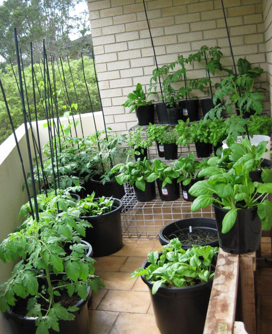 captivating winsome balcony vegetable garden ideas