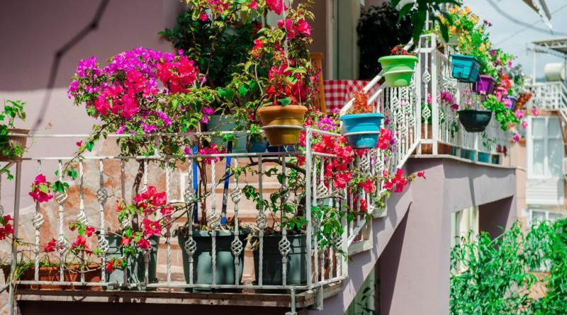 colorful flowers for narrow space
