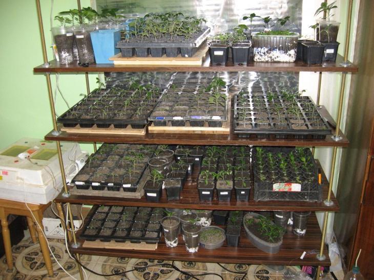 Plant wall shelving ideas