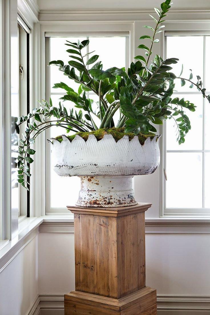 corner wooden plant stands