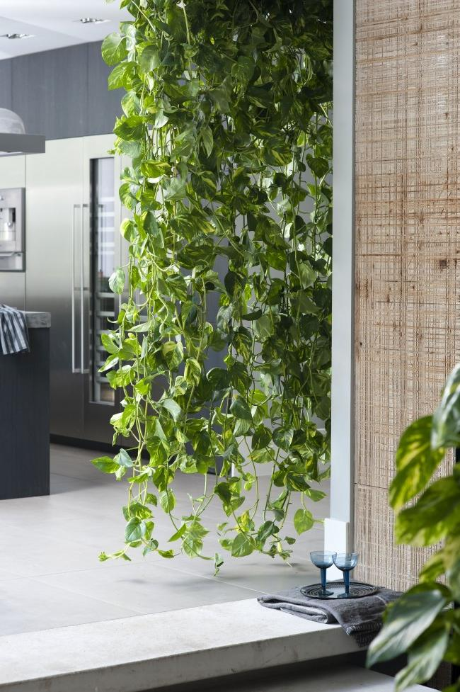 office hanging plants ideas
