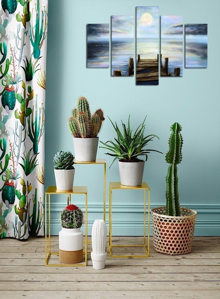 original composition of various types of home cactus
