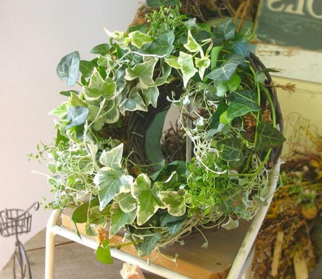outdoor hanging plants ideas