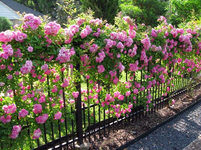 An elegant wrought-iron fence twined with flowers