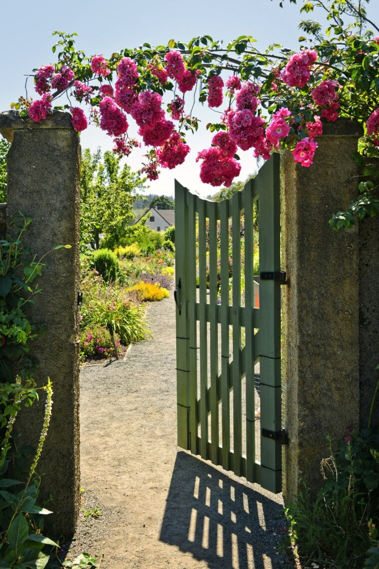 Garden entrance with wild rose arch