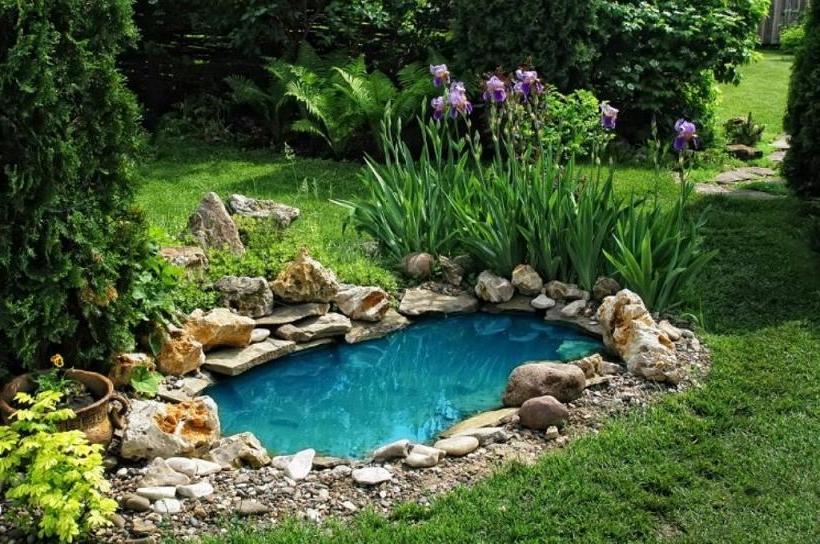 beautiful aquatic plants