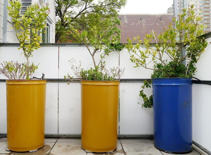 metal barrels will ideally solve the problem of planting large