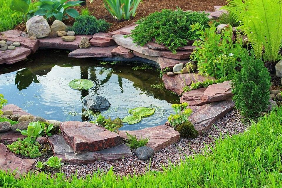 miniature pond