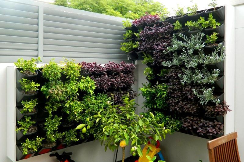 Vertical garden of succulents